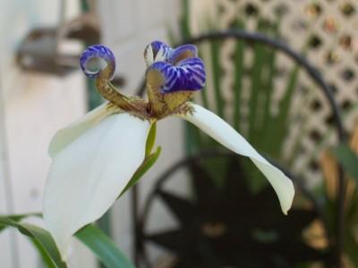Closer_flower