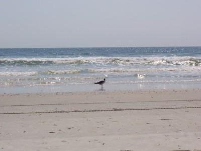 One_bird